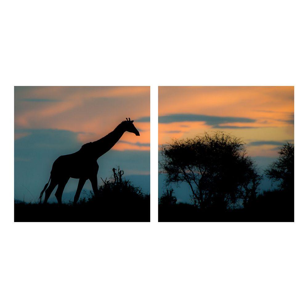 Fotografia Artistica Profissional Animais Girafa 2 de 65cmx65cm