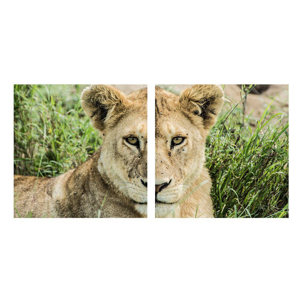 Fotografia Artistica Profissional Animais Leoa 2 de 65cmx65cm
