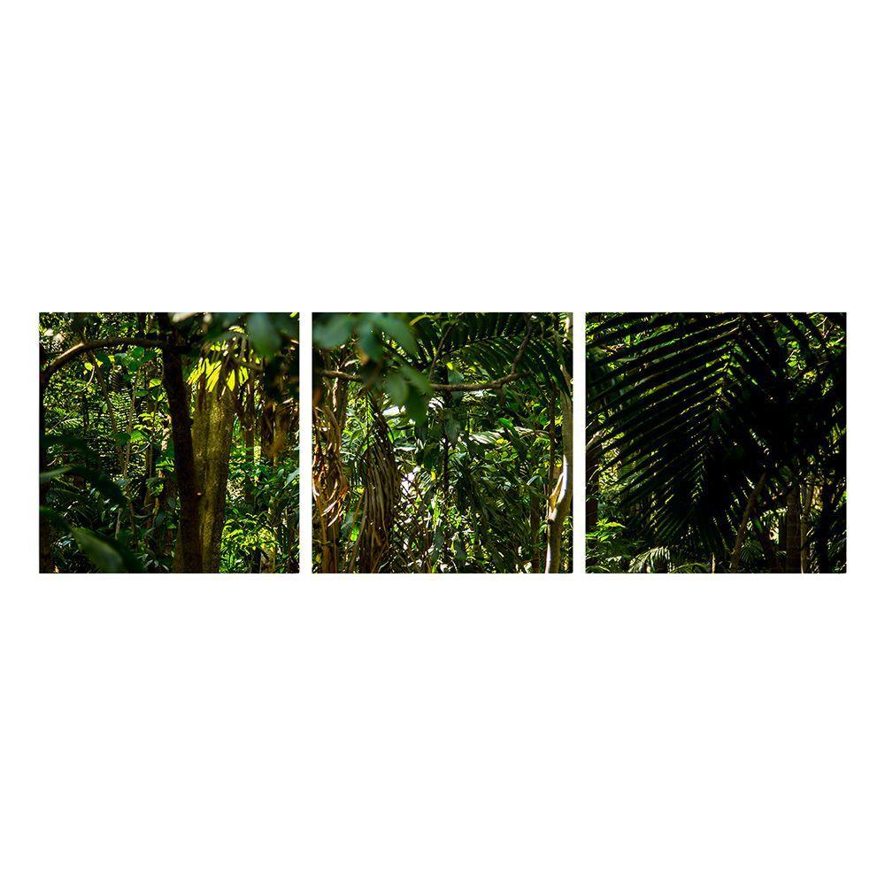 Fotografia Artistica Profissional Natureza Mata 3 de 65cmx65cm