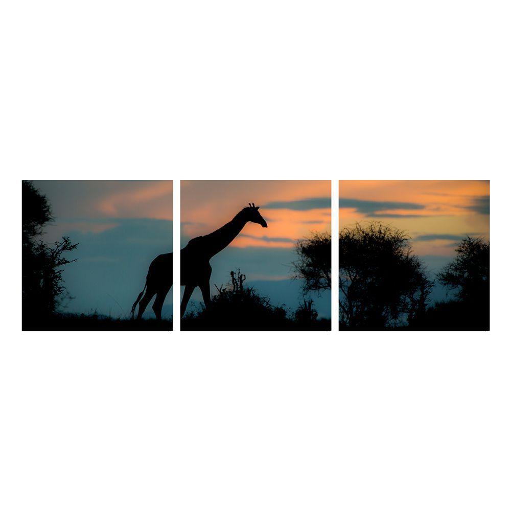 Fotografia Artistica Profissional Animais Girafa 3 de 65cmx65cm