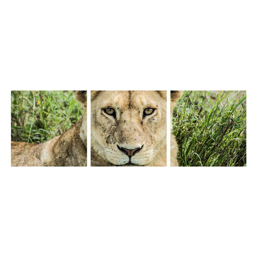 Fotografia Artistica Profissional Animais Leoa 3 de 65cmx65cm