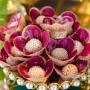 Forminhas para Doces Finos Tulipa em Tela Escócia e Tecido 100 Unidades