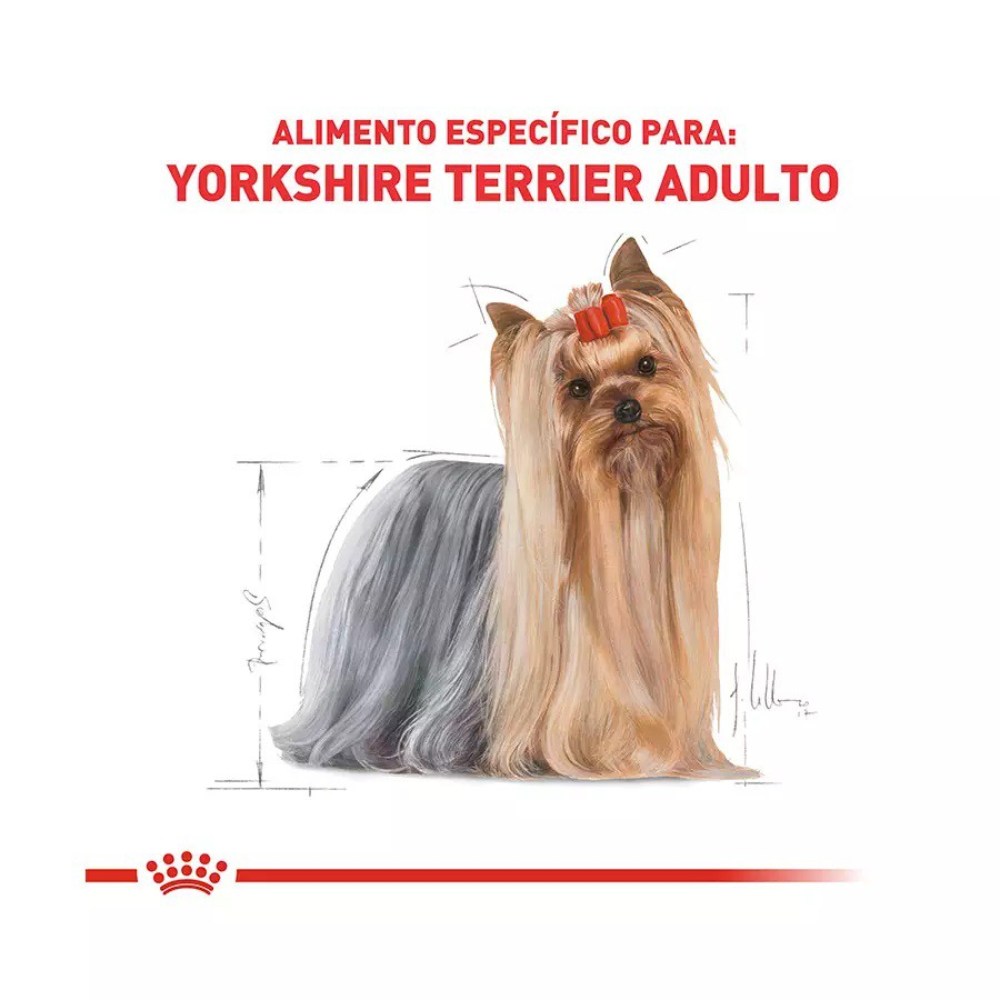 Ração Royal Canin para Cães Adultos da Raça Yorkshire Terrier