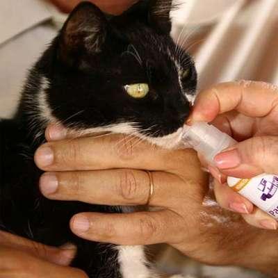 Sistema de Terapia Real H Homeo Pet Pró-Rim - 30 mL