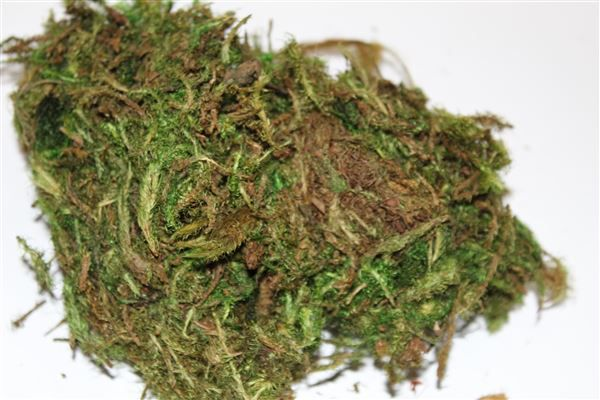 Musgo Verde Pintado 50g