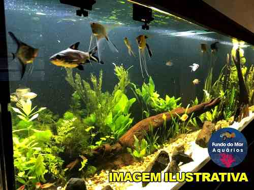 Luminária Led Nemo Light Plantado 18w Garantia De 1 Ano