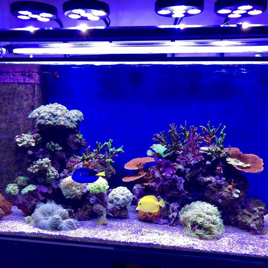 Luminária P/ Aquário Marinho 59w Led Fixture Coral Box Plus Moon