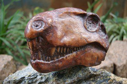 Crânio de Dimetrodonte