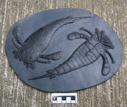 Eurypterus Fisheri