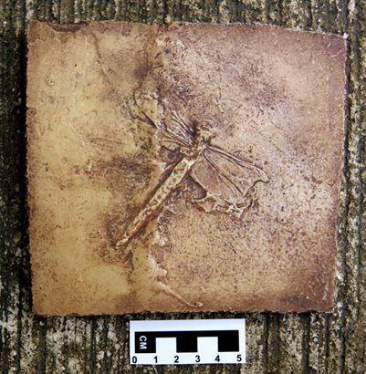 Libélula Fóssil da Formação Santana