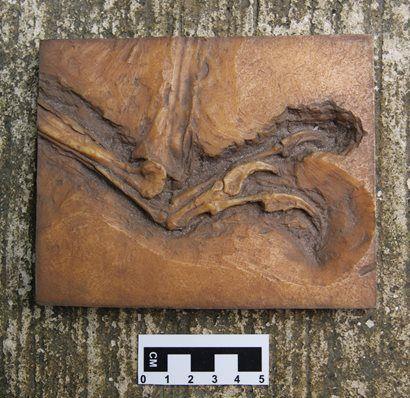 Pterossauro da Chapada do Araripe