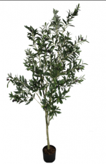 Árvore de Ameixa - 200cm
