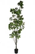 Árvore de Roma - 240cm