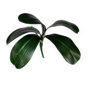 Folhagem de Orquídea - X5 32cm