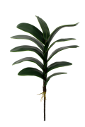 Folhagem de Orquídea - X13 - 45cm altura X 9cm Largura