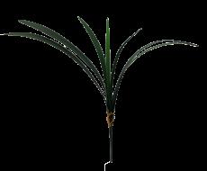 Folhagem de Orquídea - X7 - 60cm altura X 15cm Largura