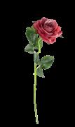 Rosa unitária - 50cm