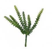 Suculenta - 24cm Altura X 17cm Largura - 6 ramos