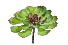 Suculenta verde M