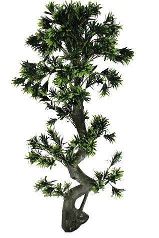 A podocarpus x200 verde - 1.4 M