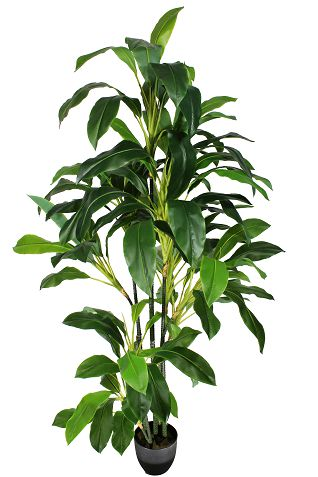 Árvore Dracena - 177Cm Altura X 60Cm Largura