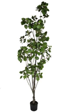Árvore De Romã - 240Cm