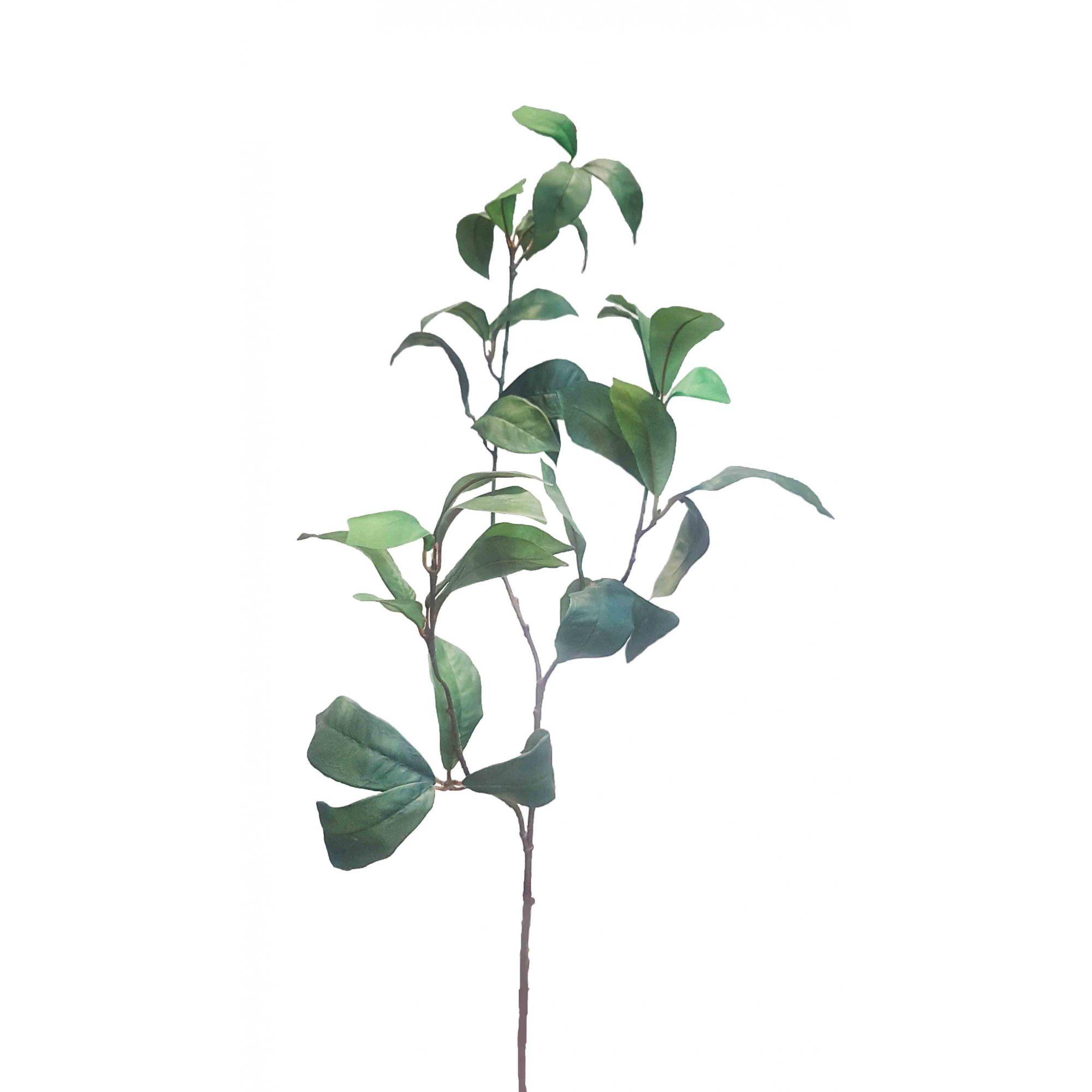 C. Folha polka x37 verde 95cm