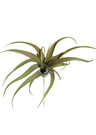 Cactus Suculenta Gg