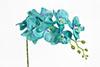 orquídea Phalaenopsis azul marinho