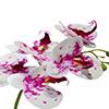 Flor de orquídea X5 - 72cm -  Branca com roxo