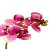 Flor de orquídea X5 - 72cm -  Rosa