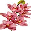 Flor de orquídea X6 - 68cm - Rosa