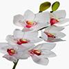 Flor de orquídea - X20 - 83cm - Branca com rosa