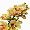Flor de orquídea - X20 - 83cm - Amarelo
