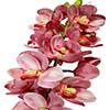 Flor de orquídea - X20 - 83cm -  Rosa