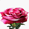 Rosa unitária  - 80cm Rosa