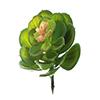 Suculenta - 12cm Altura X 10cm Largura - Verde Claro
