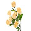 Buquê de rosa - X9 - 37cm Altura x 28cm Largura -  Champanhe