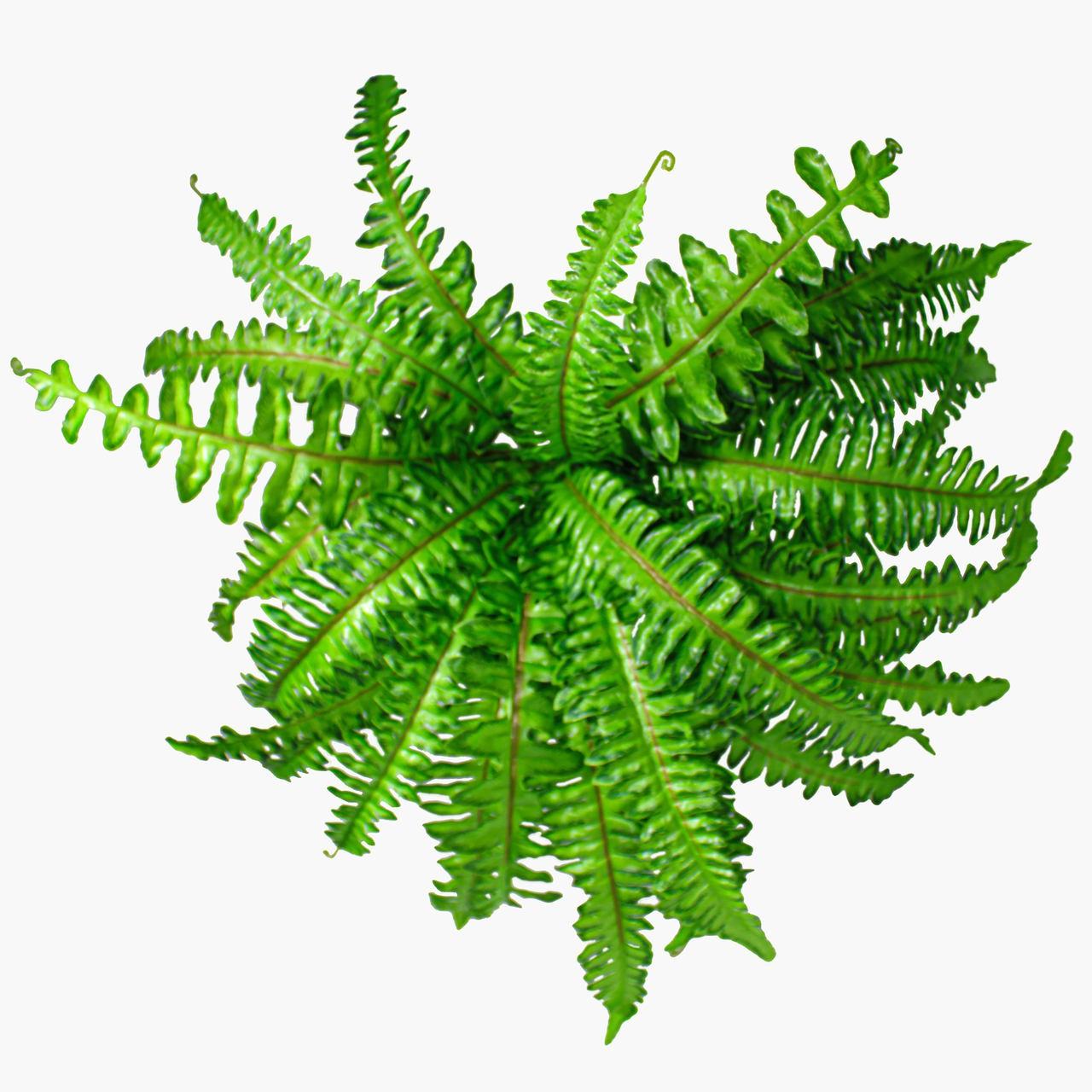 F. Samambaia X30 Verde