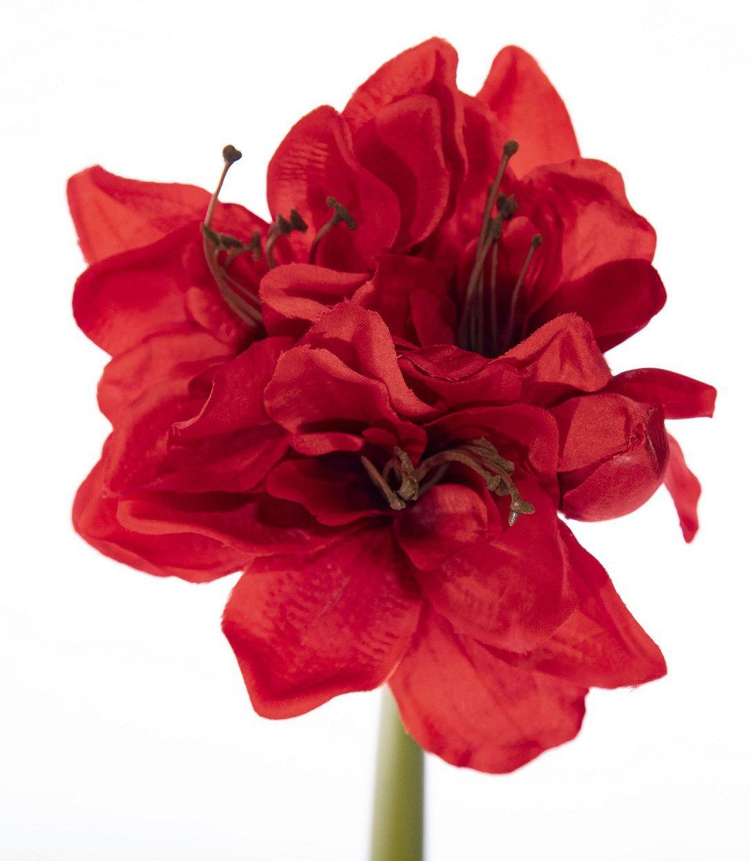 Flor De Amarilis N57203