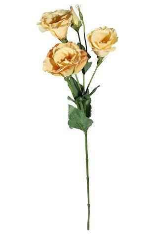 flor lisianto