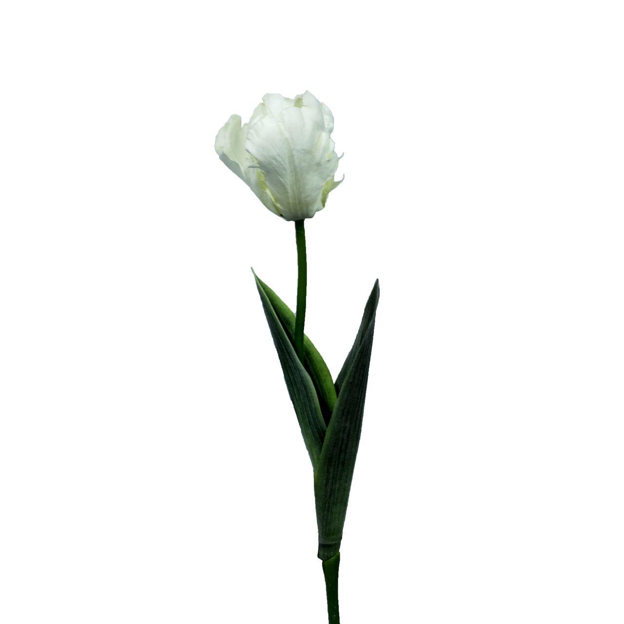 Flor Tulipa De Papagaio  Unidade