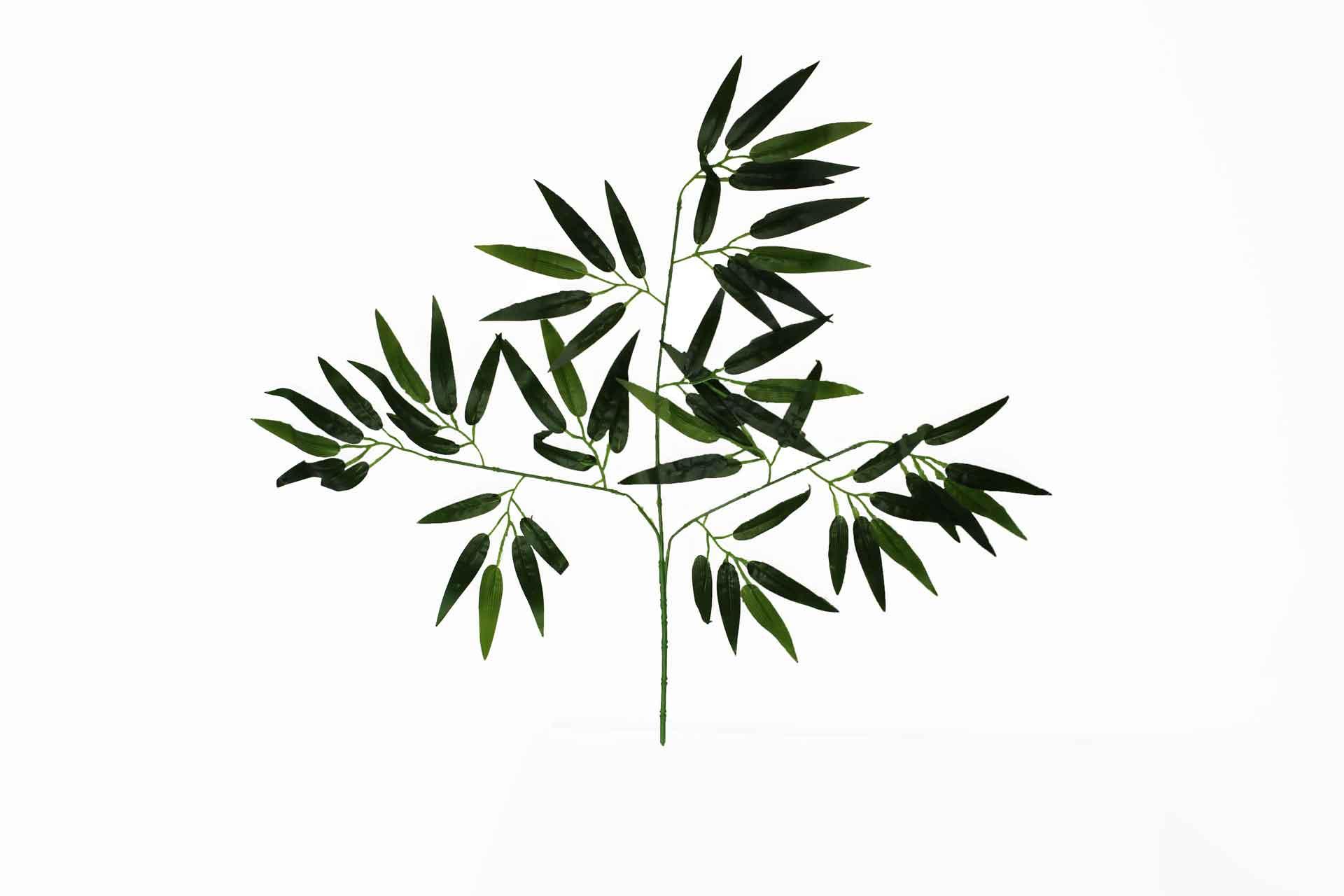 Folha De Bambu