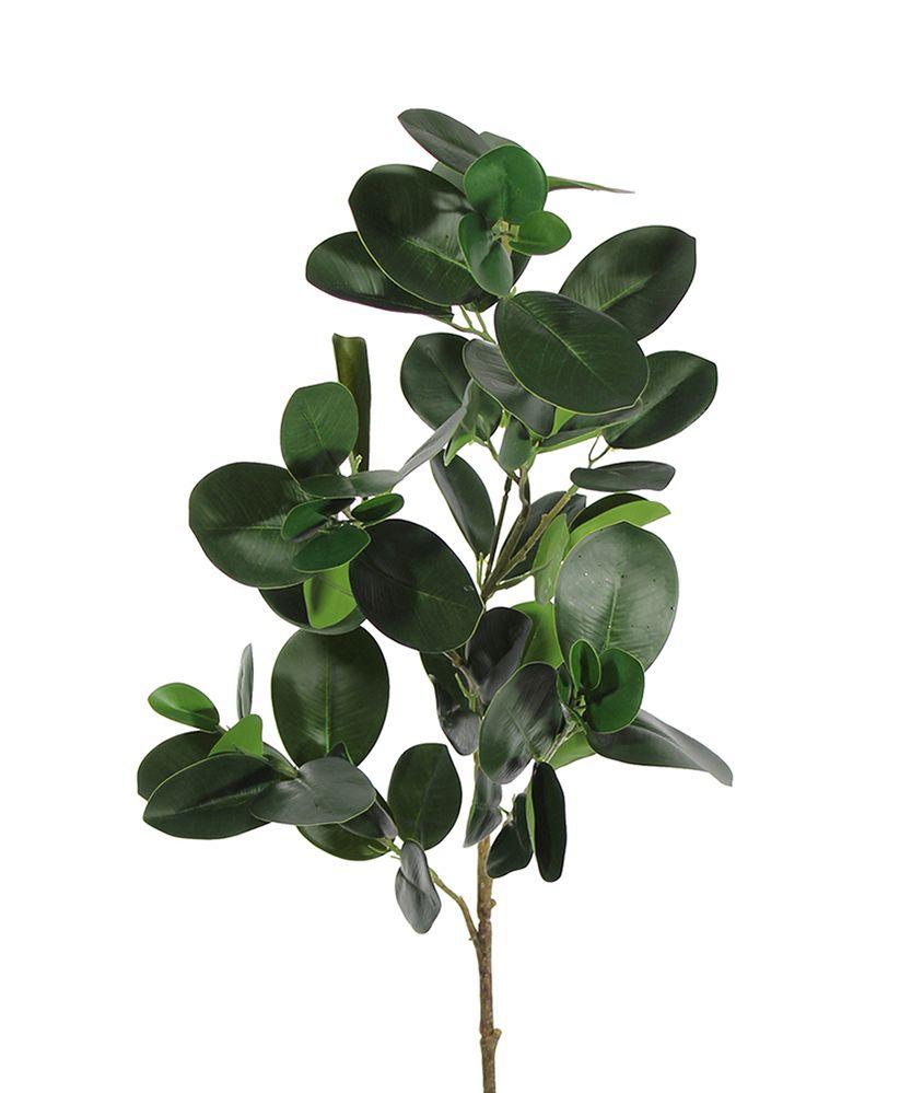 Folha Ficus Unidade