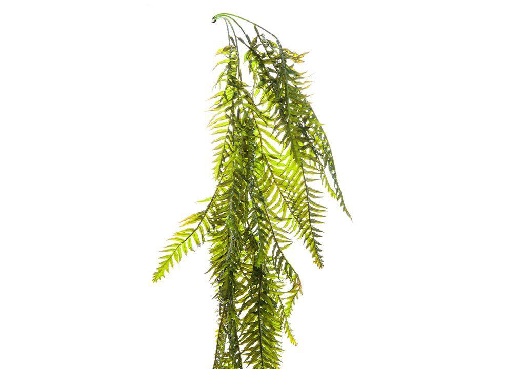 Folhagem Pendente de Samambaia - 90cm Altura