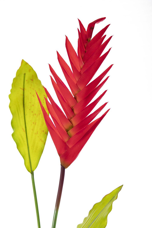 H Heliconia Real Toque C/Folha Vermelho