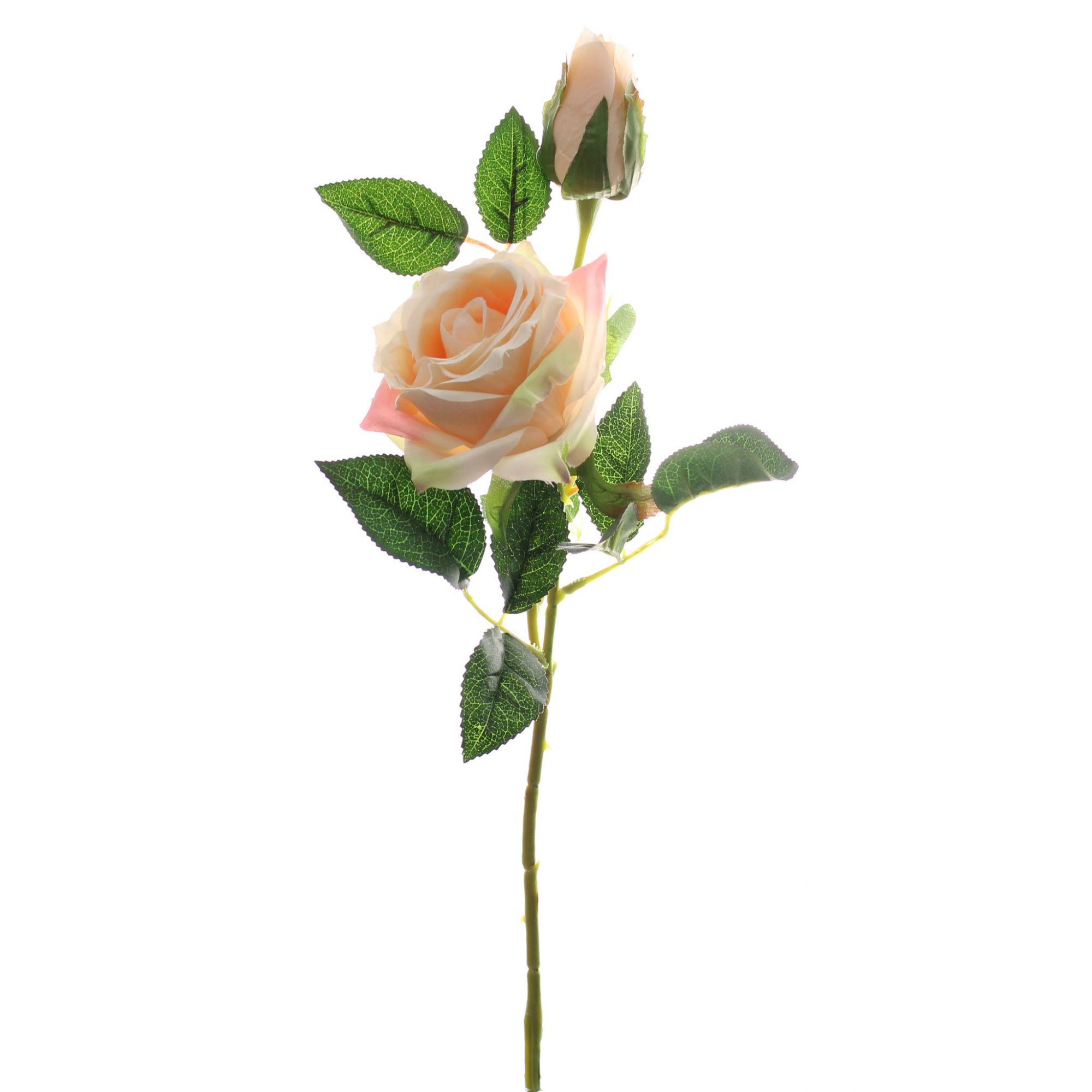 Haste Rosa X2 - 70Cm