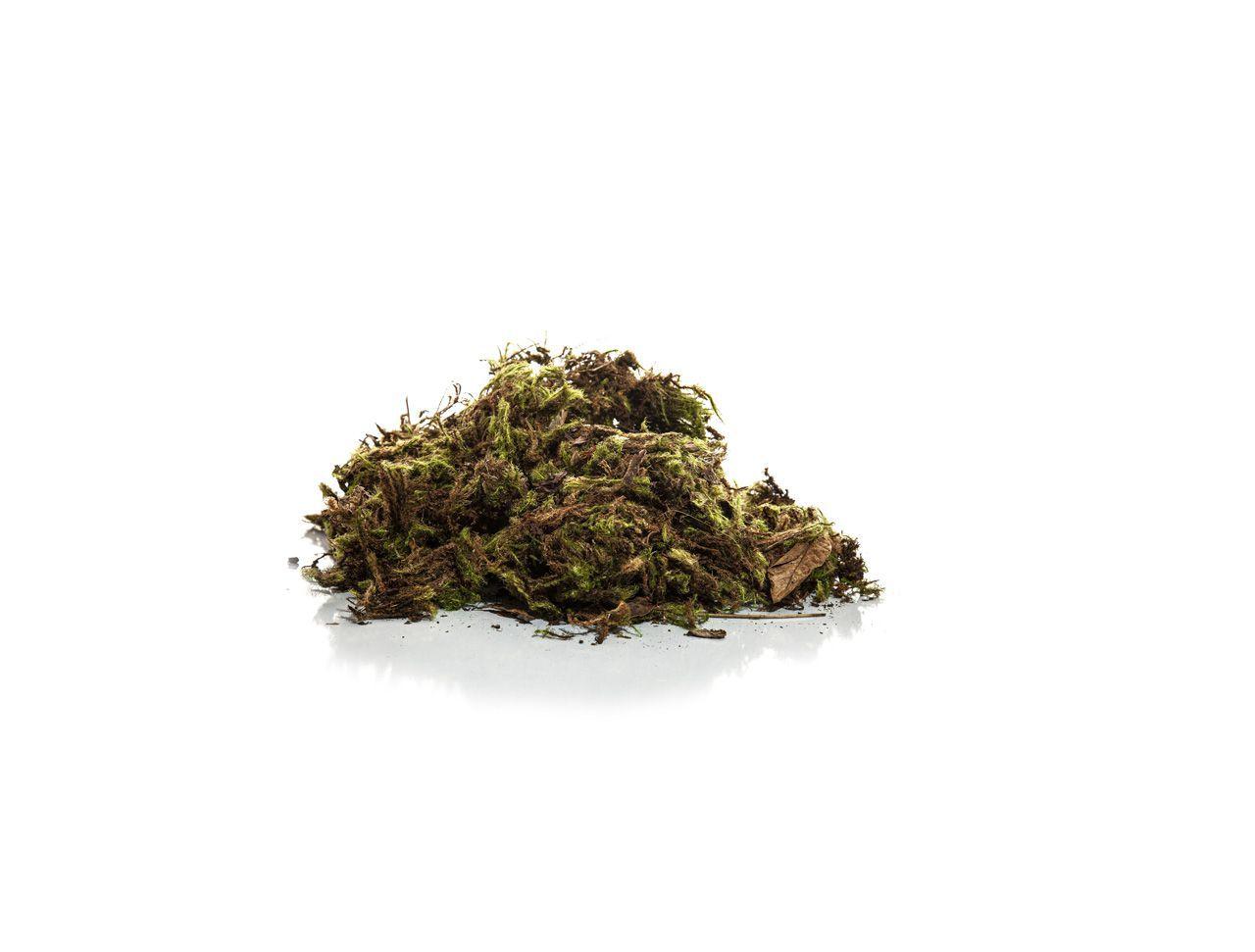 Musgo Verde - Pequeno - 60G