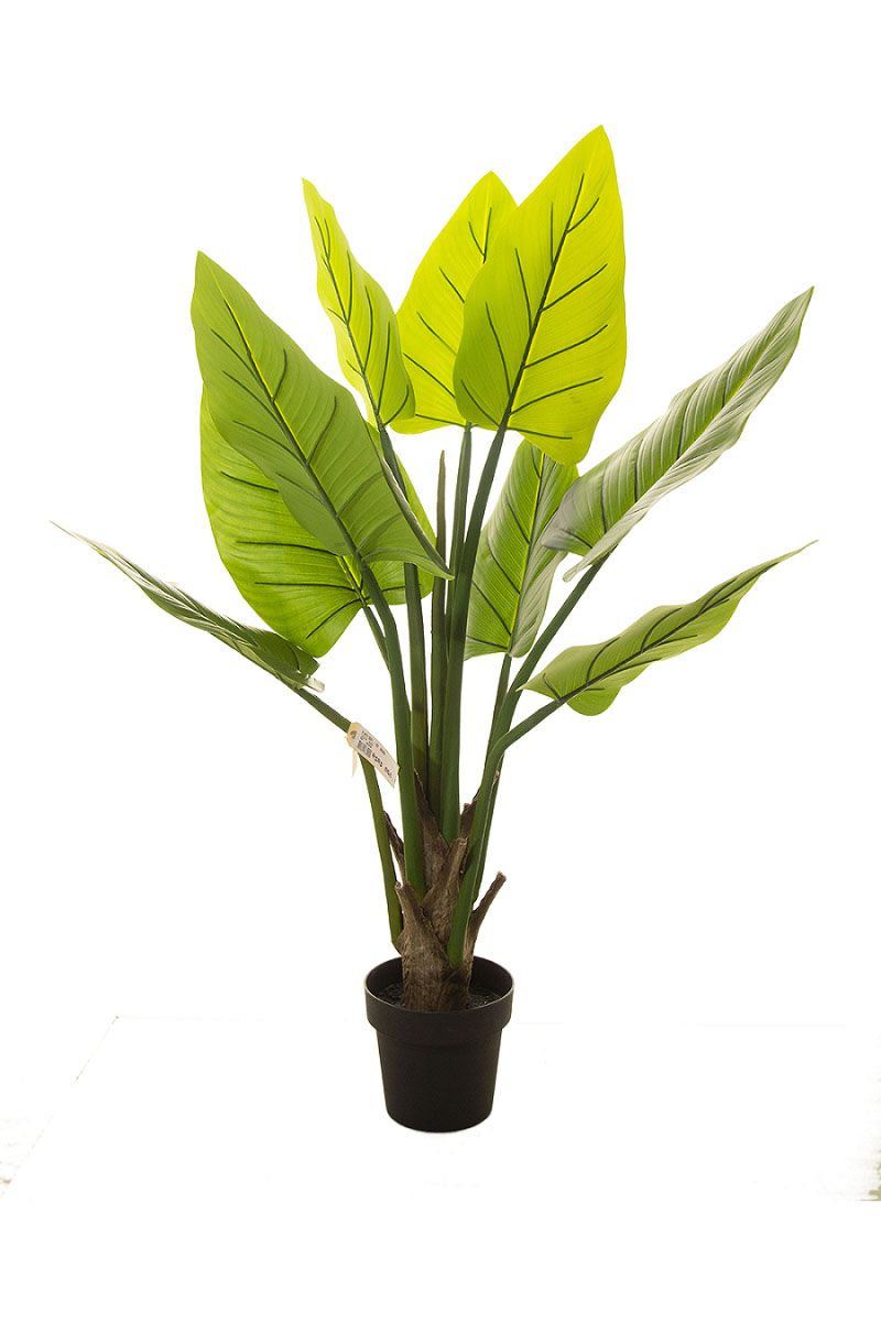 PLANTA BERYL - 130cm