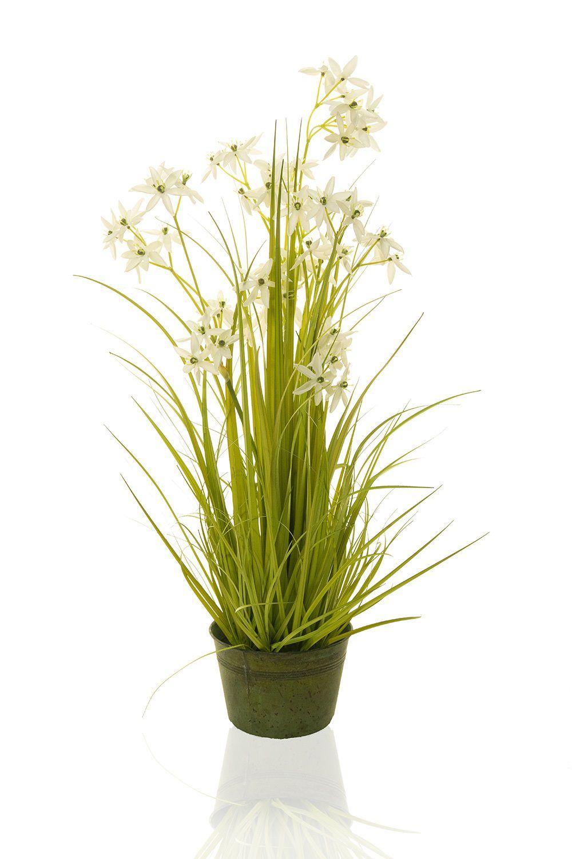 Planta Taboa - 110Cm Altura